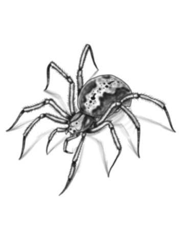 Tattooed Now! Temporary Tattoo - Spider