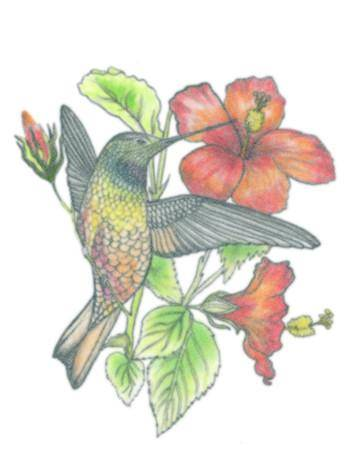 Tattooed Now! Temporary Tattoo - Humming Bird